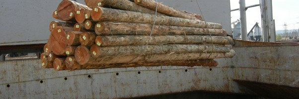Frog Hollow BC Log Exports - 5